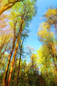 480x854 Trees Forest 5k