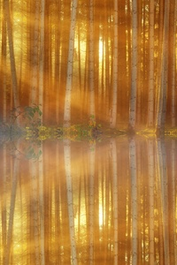 1280x2120 Trees Lakes Sunbeams
