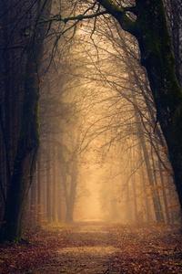 Trees Pathway