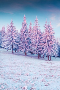 240x400 Trees Pink Colorful Cold Hills Snow 5k