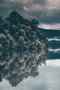 Trees River Fog Forest 5k