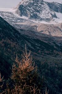 Trees Snow Mountains