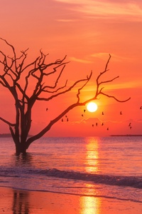 Trees Sunset Birds Water Body 4k