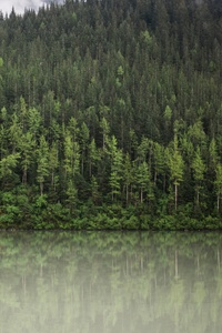 640x1136 Trees Water Nature Clouds 5k