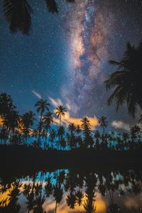 1080x2280 Tropical Palm Trees Lake 5k