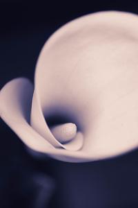 480x854 Tulip Flower Macro