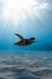 Turtle 8k