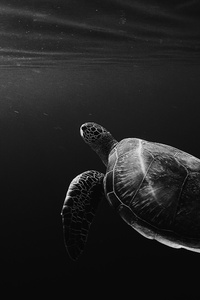 Turtle Oled 4k