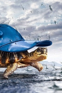Turtle With Cap Raining