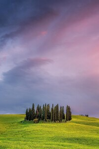 480x854 Tuscany Field In Italy