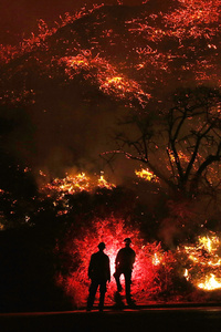 Two Man Standing In Front Of Forest Fire