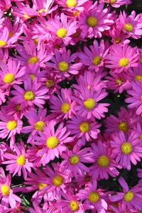 1080x1920 Violet Flowers 5k
