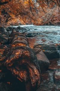 Water Body Forest Autumn 5k