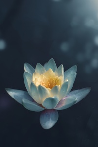 240x320 Water Lily