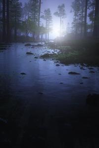 1280x2120 Water Stream Night Forest 4k