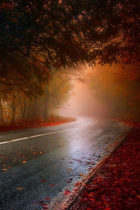 Wet Rainy Road Leaf Fallen Hd