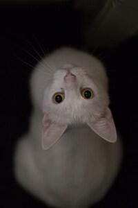 640x1136 White Cat Eyes