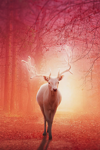 White Deer In Magical Forest 4k
