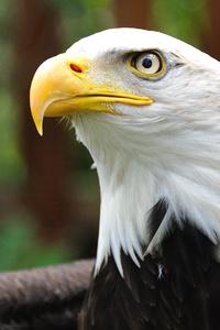 480x800 White Eagle 4k