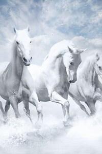320x568 White Horses HD