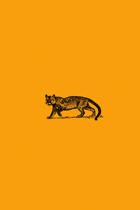 720x1280 Wild Cat Minimal 4k