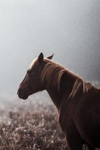 Wild Horse 8k