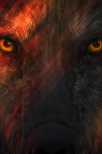480x854 Wild Wolf Eyes