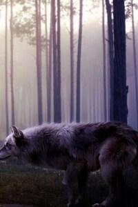 240x320 Wild Wolf