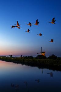 Windmill Birds Flying Evening Lake 4k