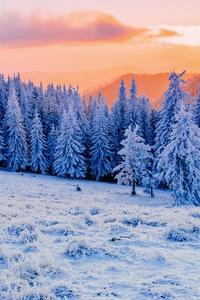 360x640 Winter Mist Sunlight Clod Hills Forest 5k