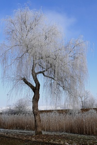 Winter Nature Frost Trees 5k
