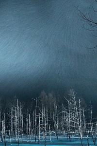 1242x2688 Winter Night Snow Trees