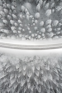 1080x2280 Winter Road 4k