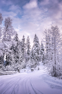 2160x3840 Winter Road Snow Trees White