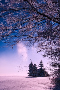 Winter Snow Sunset Dusk Sky Clouds Landscape