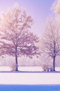 Winter Trees 5k