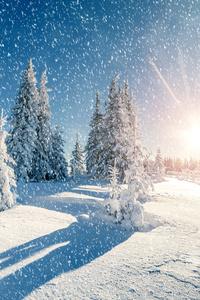 Winter Trees Snow Season 5k