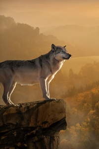 800x1280 Wolf Standing On Edge 4k