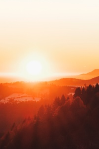 Woodland Forest Sunset