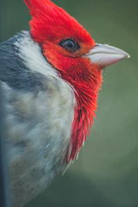 320x568 Woodpecker