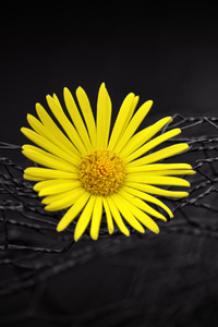 1440x2560 Yellow Flower Fence Dark Black Background