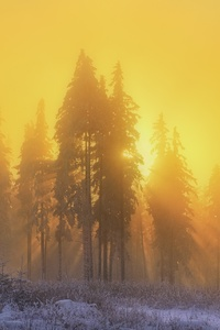 Yellow Sky Sunbeam Sunrise Trees Winter Season
