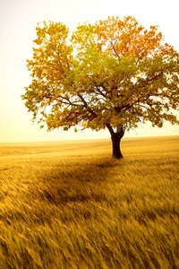 Yellow Tree In Yellow Field